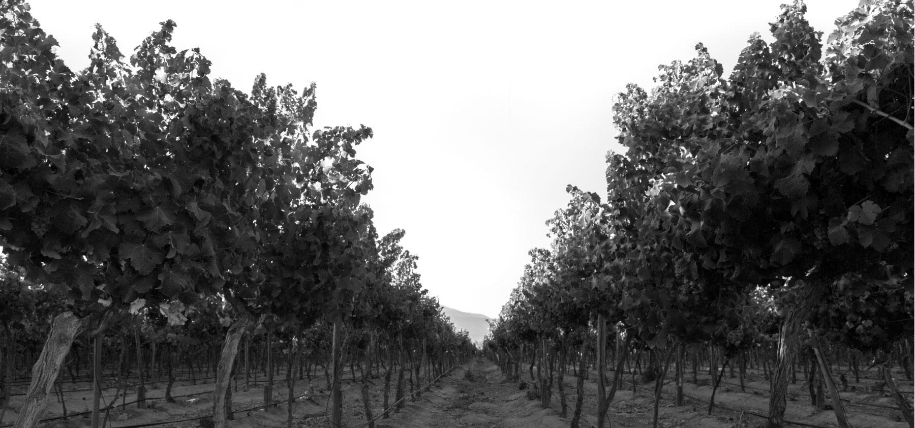 Alto Vuelo Wines